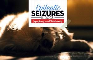 The Guide on Epileptic Seizures in Dogs