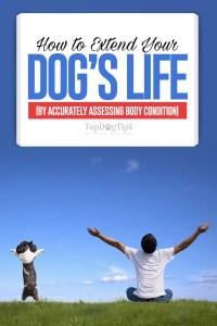 Tips on How to Extend Your Dog's Life by Accurately Assessing Body Condition