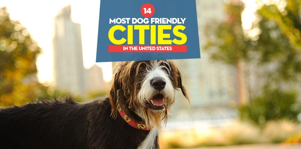 Top 14 Most Dog Friendly Cities in the United States