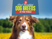 Top 35 Most Beautiful Dog Breeds in the World