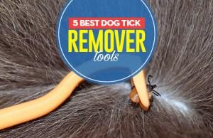 Top 5 Best Dog Tick Remover Tools