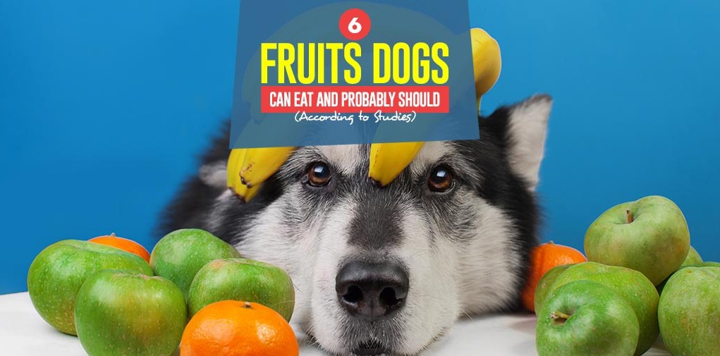Top 6 Fruits Dogs Can Eat and Probably Should (According to Scientific Studies)