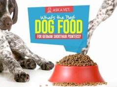 Top Best Dog Foods for German Shorthair Pointers