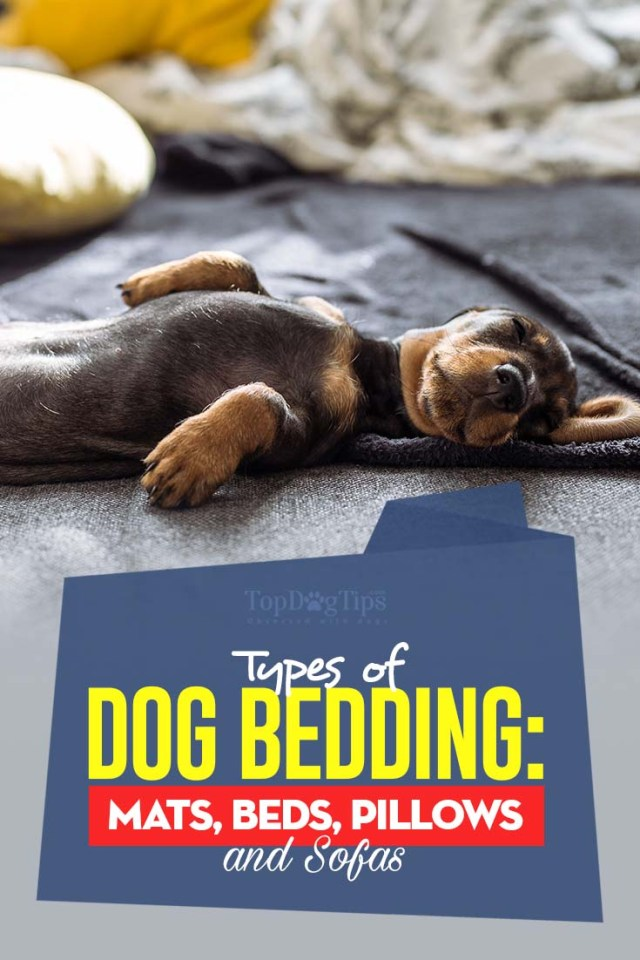 All Types of Dog Bedding - Mats Beds Pillows and Sofas