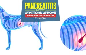 Facts on Pancreatitis in Dogs