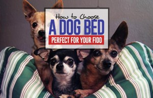 Guide on How to Choose a Dog Bed Perfect for Your Fido