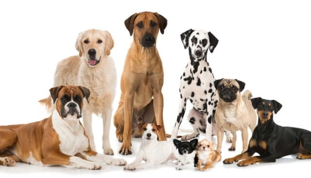 Health of Purebred Dog vs. Mutts