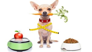 Scientific Reasons Homemade Dog Food is Better