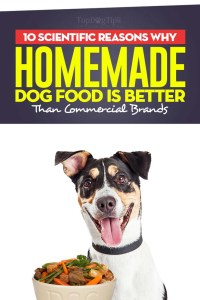 The 10 Scientific Reasons Homemade Dog Food is Better Than Commercial Foods