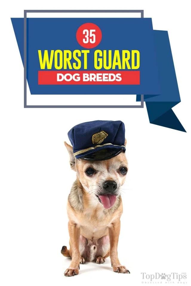 The 35 Worst Guard Dog Breeds