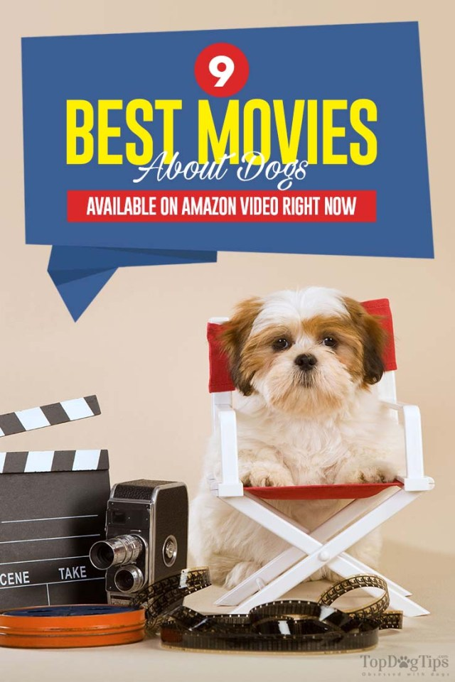 The Best Movies About Dogs Available on Amazon Video Right Now