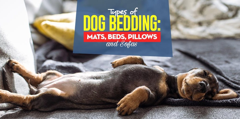 The Different Types of Dog Bedding