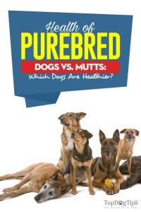 The Health of Purebred Dogs vs Mutts