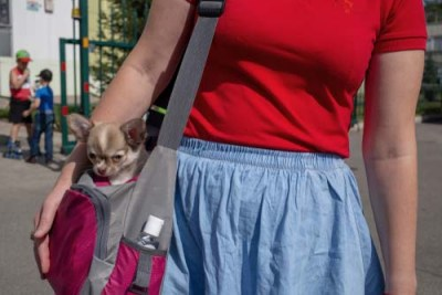 The pros of sling dog carrier