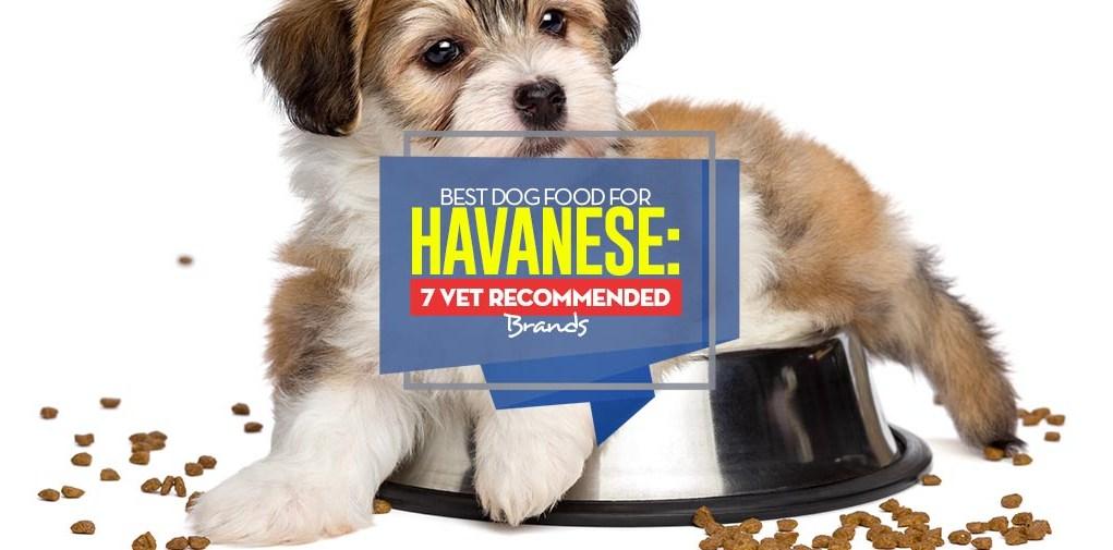 Top Best Dog Food for Havanese