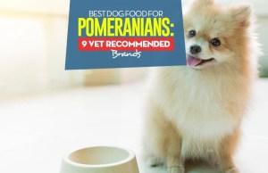 Top Best Dog Food for Pomeranians