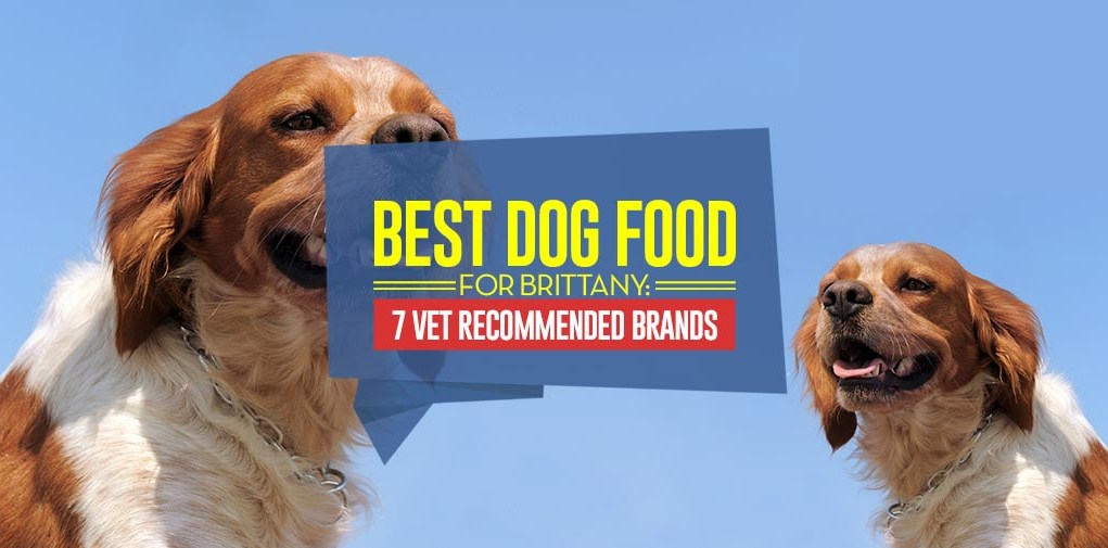 Top Best Dog Foods for Brittany