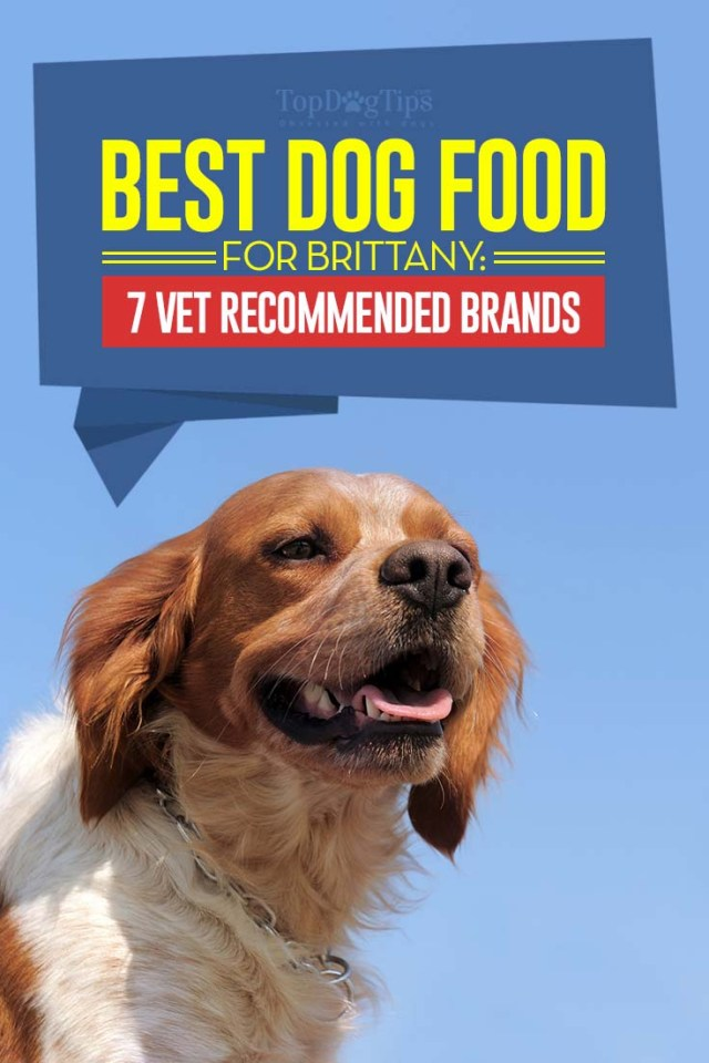 Top Vet Rated Best Dog Foods for Brittany