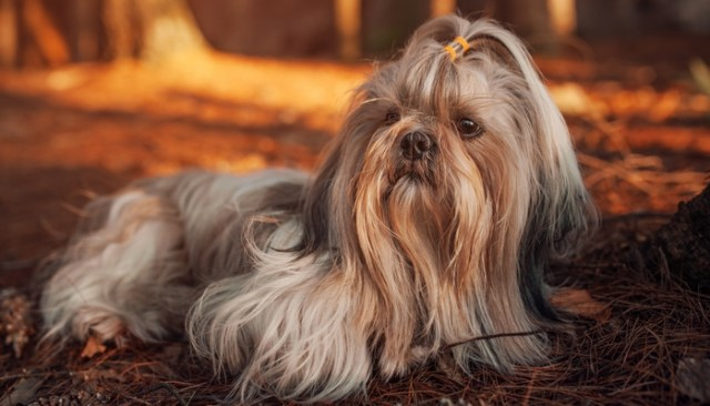 Worst Breeds for Guard Dogs