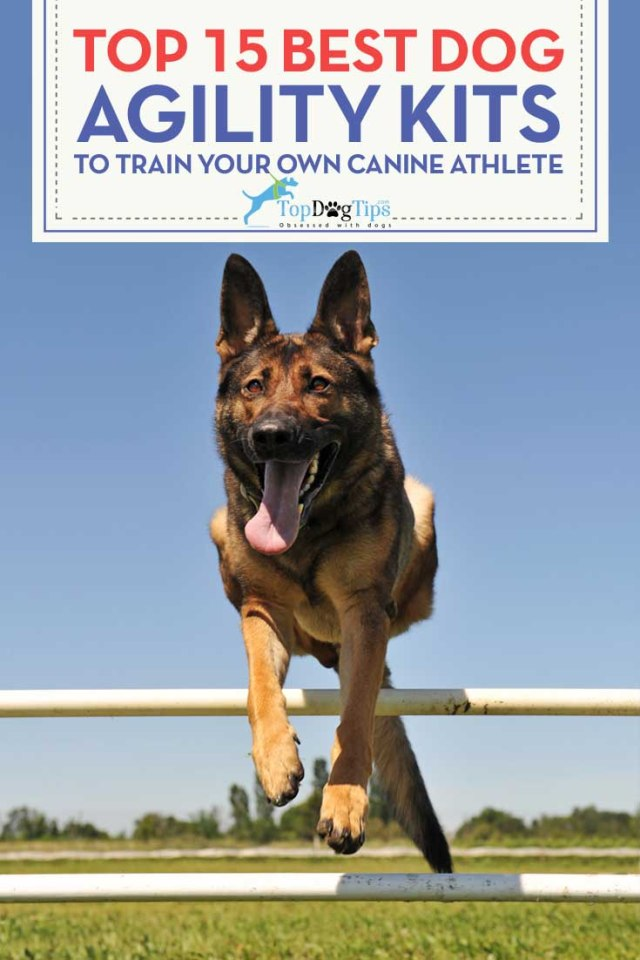 15 Best Dog Agility Equipment Kits for Your Backyard
