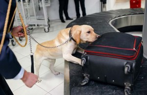 Bomb-Sniffing Dogs Just Became Even Better Through Vapor Analysis