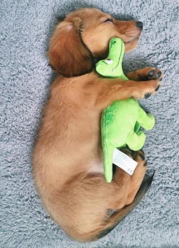 When you're so cute, even your toys are smiling