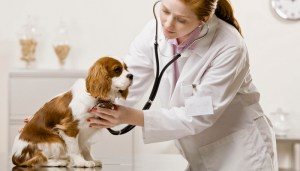 Veterinary treatment for enlarged heart in dogs