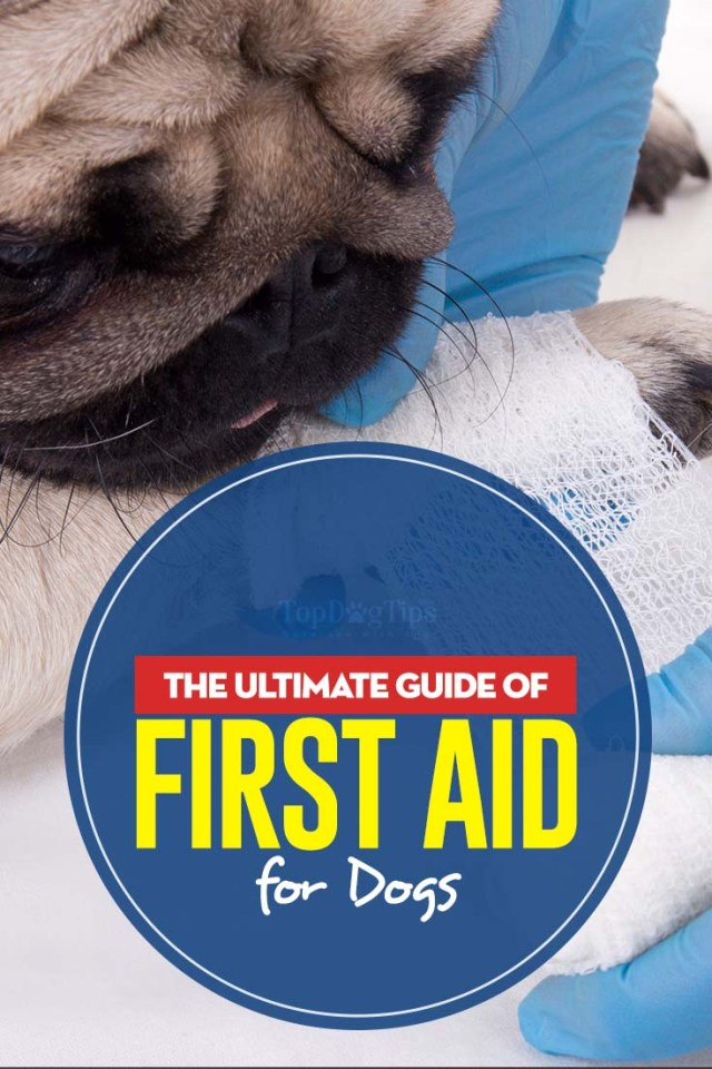 Guide to First Aid for Dogs