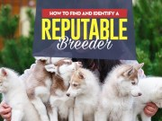 How to Find a Reputable Dog Breeder Locally
