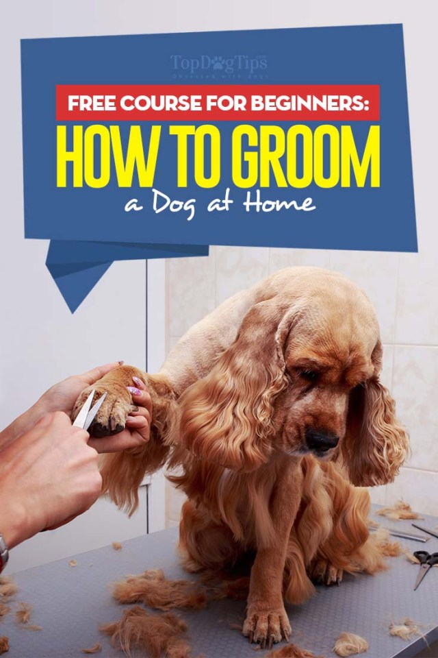How to Groom a Dog 101 - FREE course for beginners