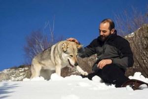 Man playing with Czechoslovakian wolf dog