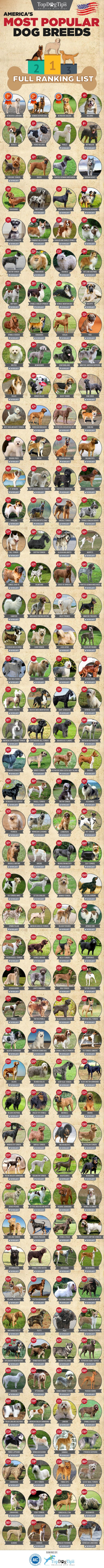 Most Popular Dog Breeds in America (Infographic)