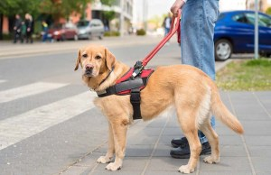 New Tool to Help You Choose the Best Guide Dog