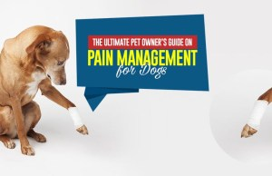 Pain Management for Dogs Tips