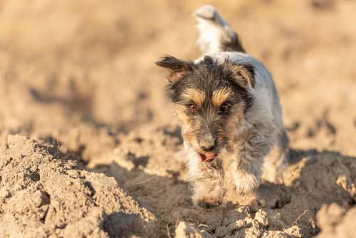 Protect Your Dog's Paws from Dangerous Surfaces