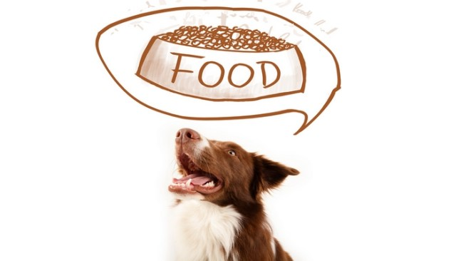 Rational Ways to Assess Healthy Dog Food