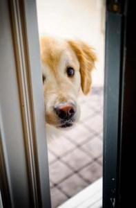 Scared and stressed dog peeking