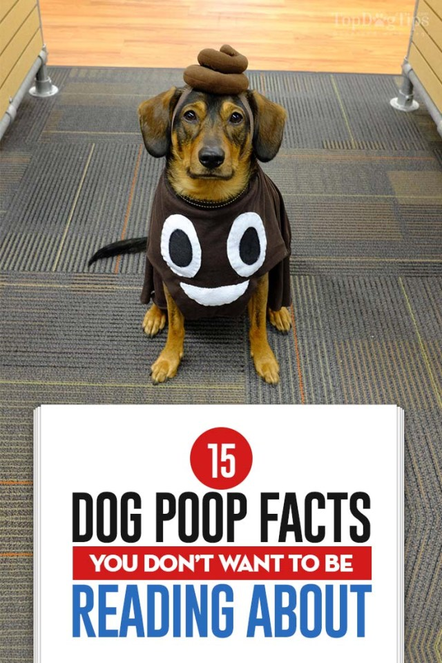 The 15 Dog Poop Facts