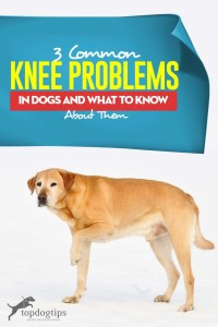 The 3 Common Knee Problems in Dogs and What to Know About Them