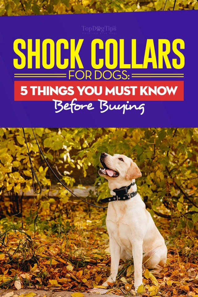 The Shock Collar for Dogs