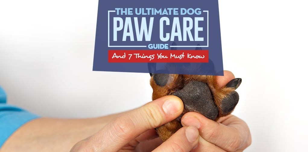 The Ultimate Dog Paw Care Guide