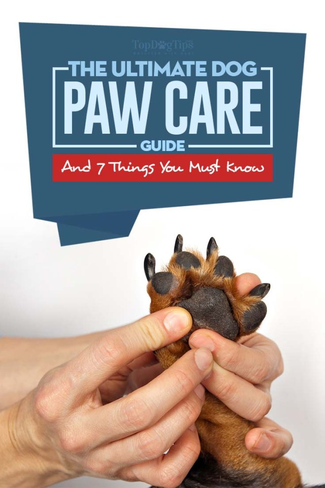 The Ultimate Dog Paws Care Guide