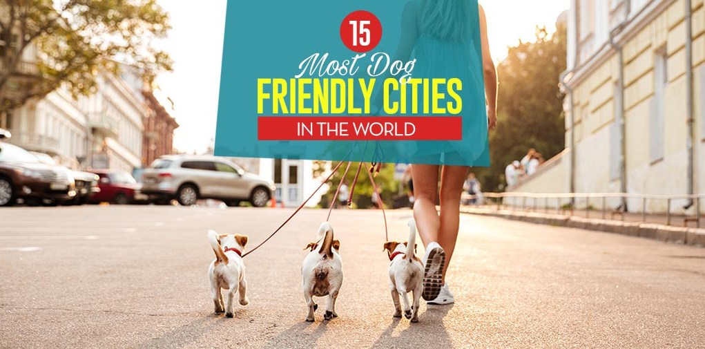 Top 15 Most Dog Friendly Cities in the World