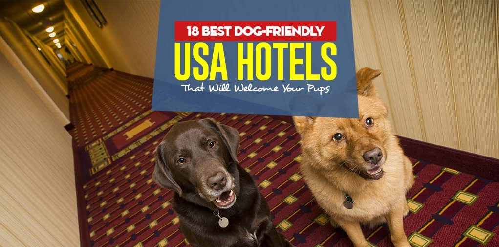 Top 18 Best Dog-Friendly USA Hotels That Will Welcome Your Pups