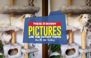 Top 21 Doggy Pictures Are the Cutest Thing You'll See Today