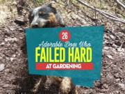 Top 26 Adorable Dogs Who Failed Hard At Gardening