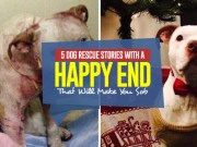 Top 5 Dog Rescue Stories With A Happy End That Will Make You Sob