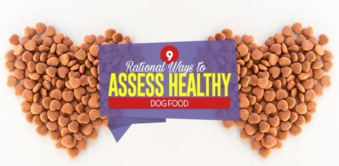Top 9 Rational Ways to Assess Healthy Dog Food