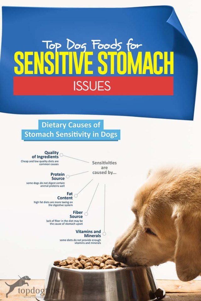 Top Best Dog Food for Dogs with Sensitive Stomachs