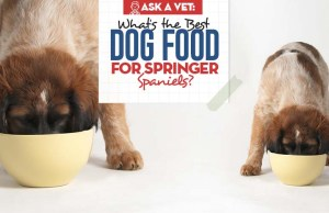Top Best Dog Food for Springer Spaniels